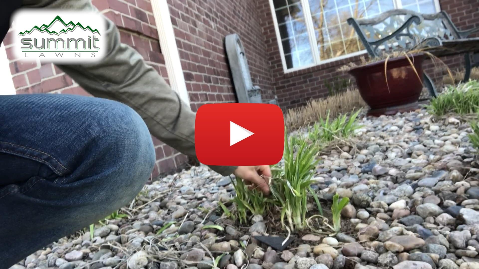 5 Things You Can do to Improve Your Yard
