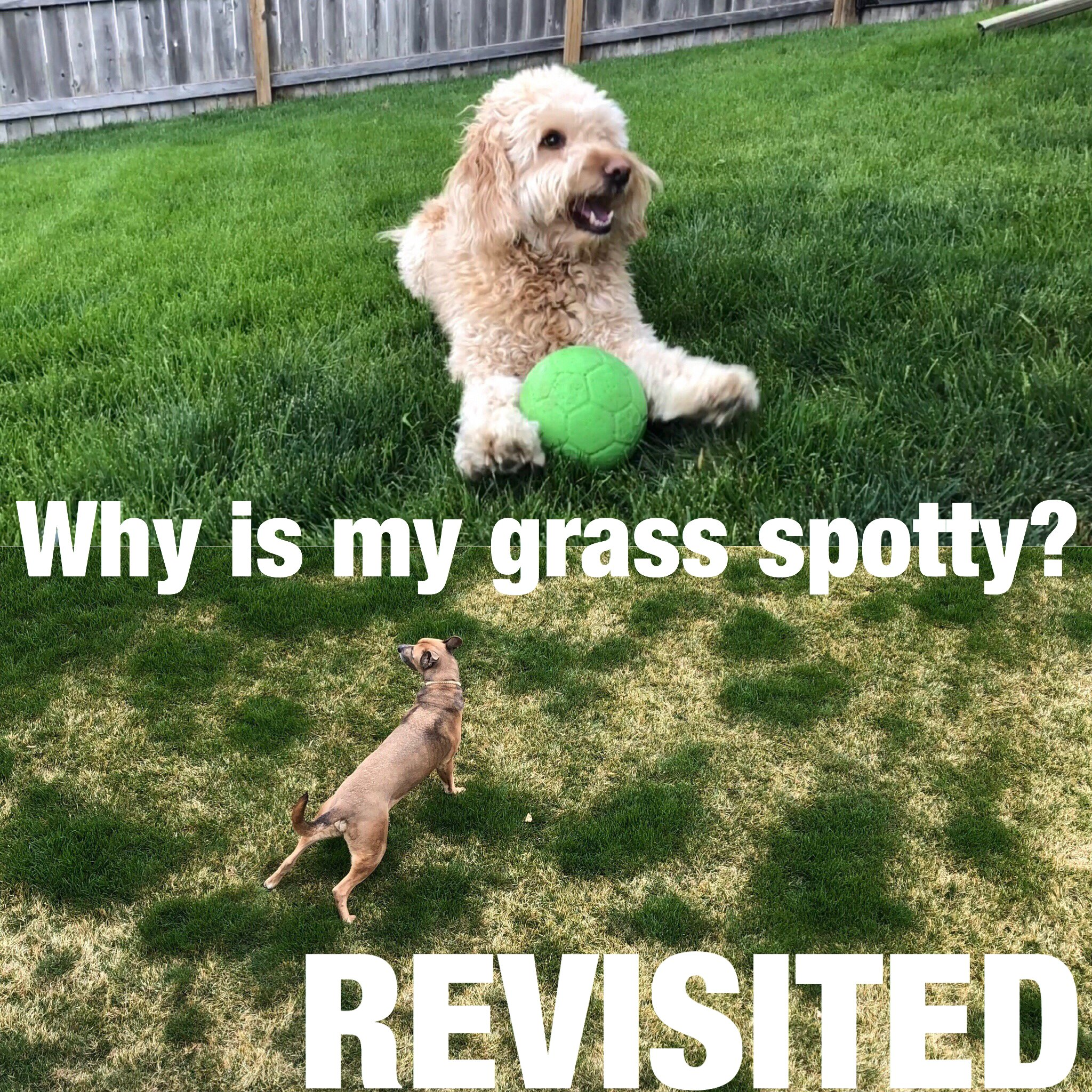 What to do if your dog makes your Lincoln Lawn spotty