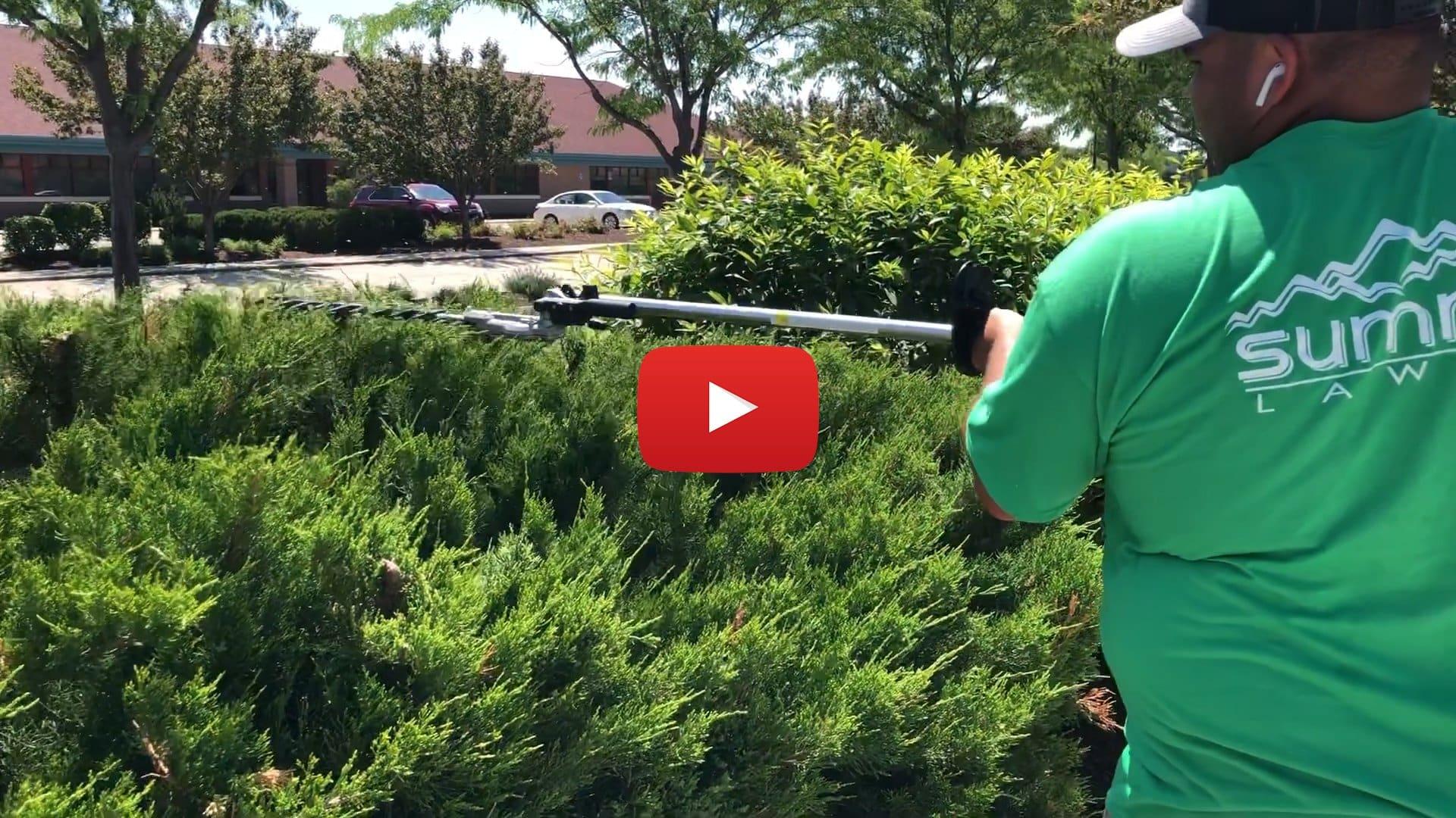 How to properly trim a Juniper Bush